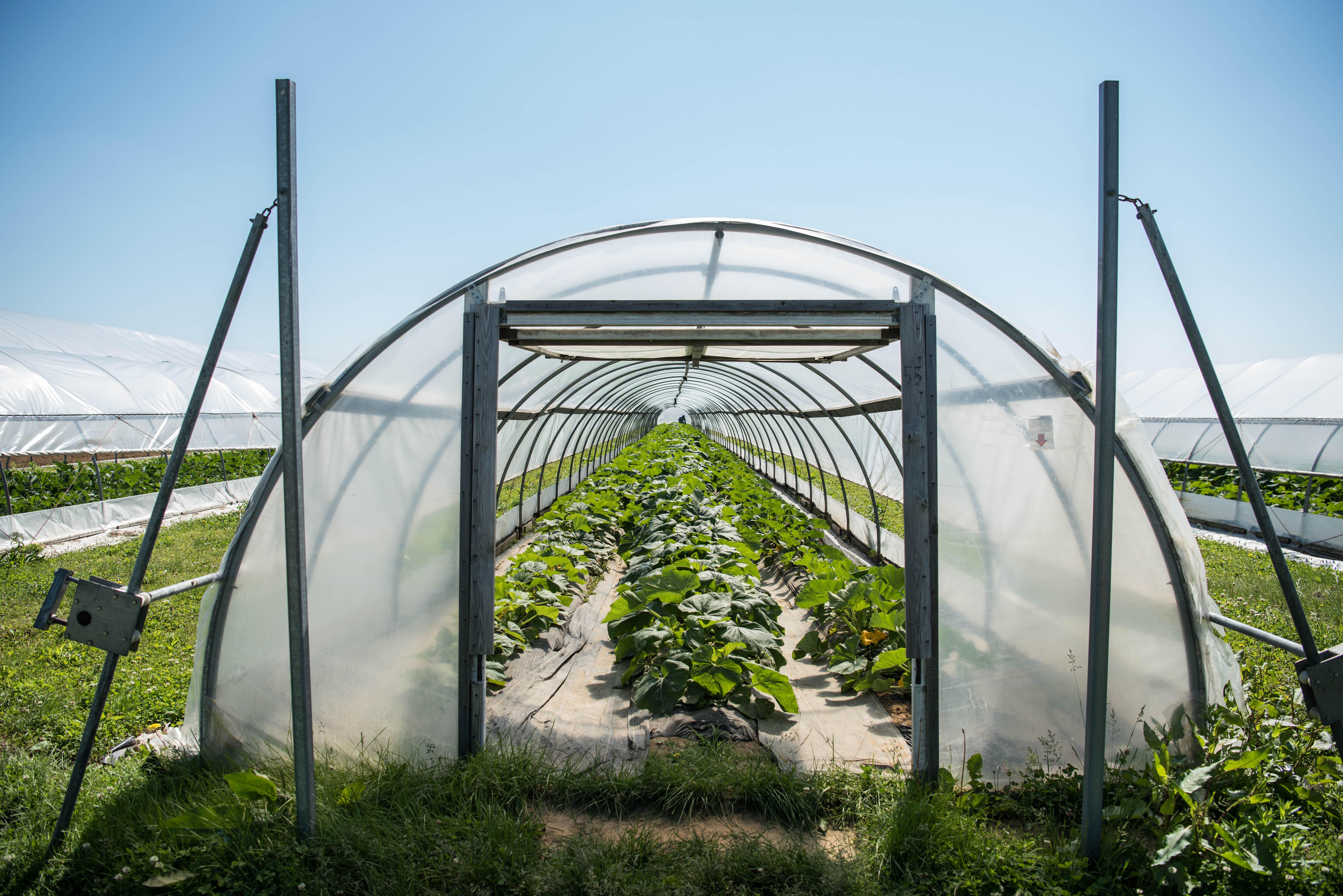 Chef Garden: Farmer Lee Jones: List Of Top Ten Summer Crops In 2017