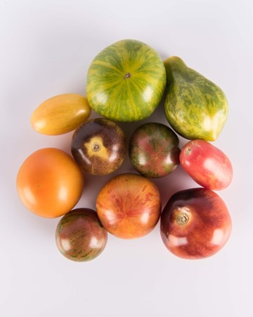 Mixed Toy Box Tomatoes