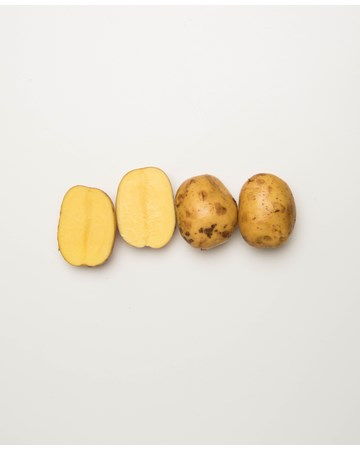 Potato-Gullauga-D-1-of-1