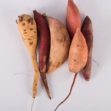 Mixed Sweet Potatoes